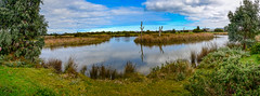 Part of the wetlands (Kev Anderson) Tags: ainly an interesting place kev