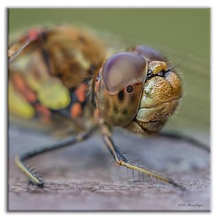 Dragonfly eye - really close