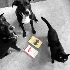 According to a study conducted in late April by the U.S. Department of Education and the National Institute of Literacy, 32 million adults in the U.S. can't read. (anokarina) Tags: puppies dogs pets kitten kitty blackcat doggies colorsplash bw blackwhite books appleiphone louisville kentucky ky