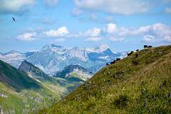 Sntis (Igelskar) Tags: hiking sargans oberschan alvier berge schweiz swissmountains