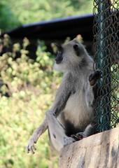 sri_lanka_trincomalee_04 (Kudosmedia) Tags: sri lanka trincomalee nelson fort fredrick harbour temple coast beach deer monkey legend fortress asia claringbold trevor