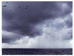 Near Tikehau by: Guy Tillim, 2011 (selphie10) Tags: sea water sky clouds storm emptyspace guytillim tikehau neartikehau amsterdam holland museumofphotography huismarseille seagulls seagull darkclouds
