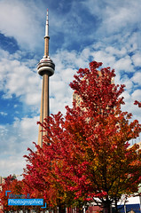 Fall Toronto (Warren Qc) Tags: toronto canada cn tower tour ontario quebec fall colour autumn automne ete indien summer red rouge feuille tree