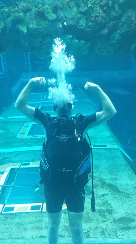 Diving at EPCOT 2015