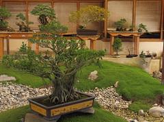 Bonsai (StephanExposE) Tags: bonsai arbre tree minature jardin parc parcfloraldeparis floral printemps spring 1635mm 1635mmf28liiusm canon 600d paris iledefrance france japon japan stephanexpose