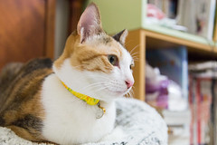 20140129-IMG_1435 (Noelas) Tags: pet cat canon eos is momo taiwan mo 01 l 5d 29 dslr   ef f4    2014 24105 yunlin markiii  24105mm 24105l  canonef24105mmf4lisusm  241054lis l  241054 canoneos5dmarkiii 5d3