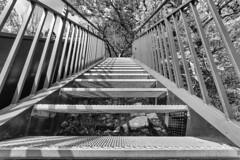 007_Flickr Farbe.jpg (stefan.mohme) Tags: deutschland hessen treppe schwarzweiss kamera nahaufnahme schleswigholstein stufen treppenstufen aussichtsplattform quickbornheide weserskywalk hessen2015