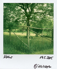 Zaun #  Polaroid_Impossible_600_Color - Polaroid Land Camera SX70 folding - 2015 (irisisopen f/8light) Tags: camera color film analog polaroid sx70 600 land instant folding impossible irisisopen