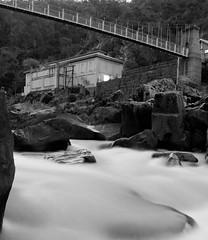 Of another generation (Rich Morrison) Tags: river duck south australia tasmania gorge reach launceston esk