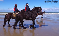 Black Fanny (hobbyphoto18) Tags: horses horse mer france reflection beach animal cheval pentax reflet northsea extrieur nordpasdecalais plage dunkerque merdunord chevaux k50 littoral cotedopale leffrinckoucke pentaxk50