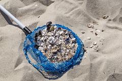 TH20160505A608186 (fotografie-heinrich) Tags: strand ostsee netz zingst muscheln stdteortschaften