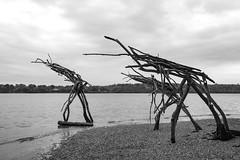 the ents prepare for battle (Satirenoir) Tags: sculpture water alexandria virginia spring overcast driftwood dcist potomacriver unknownartist unknownauthor bw365 straightoutoftolkien