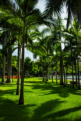 Palm Trees (betadecay2000) Tags: trees green waterfront lawn australia palmtrees australien grn aussie bume baum sunnyday rasen northernterritory precinct australie idylle palmen austral tropen tropisch darwinwaterfront