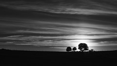 Mono horizon (jarnasen) Tags: trees light sunset sky blackandwhite bw copyright sun sunlight nature monochrome field backlight clouds contrast vintage fence landscape mono evening nikon sheep noiretblanc sweden outdoor handheld sverige freehand treeline optics svartvit stergtland sunstars sigma70210f28 d810 nordiclandscape jarnasen