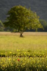 Piedmont spring (MILESI FEDERICO) Tags: world travel wild italy detail primavera nature colors spring nikon europa europe italia colore details natura piemonte dettagli colori piedmont valsusa dettaglio nital valdisusa milesi d7100 visitpiedmont iamnikon nikond7100 milesifederico
