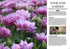 Double page magazine spread (tom-steele) Tags: flowers plants june butterfly magazine garden typography purple text butterflies double article page magazinespread magazinearticle doublepage doublepagespread