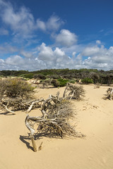 Formby point (Keartona) Tags: formbypoint formby landscape merseyside england coast coastline sandy dunes sunny summer day windblown pine trees