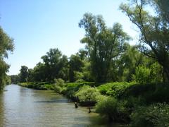 Dabube Delta (cod_gabriel) Tags: danubedelta deltadunrii tulcea danube dunrea dunarea dunare dunre donau duna tuna stuf woods pdure canal romania roumanie romnia delta delt wetlands