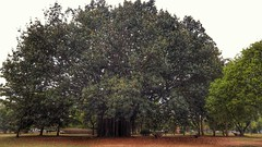 20160811_120528-01 (filipealves1) Tags: sopaulo trees nature natureza parque ibirapuera brazil brasil