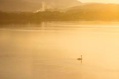 gloaming elegance (Pan.Ioan) Tags: swan lake sunset bird beauty beautiful mountains animal color