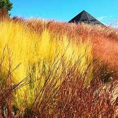 high grass (ekelly80) Tags: denver colorado denverbotanicgarden october2016 fall gardens flowers grasses yellow red light golden sun glow thick high