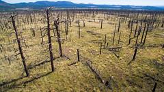 DJI_0018 (Greg Meyer MD(H)) Tags: deadtrees drone shultzpassroad flagstaff arizona unitedstates us