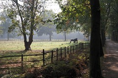 Fading Summer (CosmoClick) Tags: fall herfst autumn summer meadow landscape rural horse cosmoclicky shadows