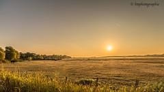 le soleil se lve ..... (Steph-Photographie) Tags: sunset soleil levdesoleil vert herbe arbre nikon nikond610 nikonpassion nikond610irix15mmf24 irix irixlens irix15mmf24 champs nouvelleaquitaine charentemaritime charente poitoucharentes d610 d610fx fx