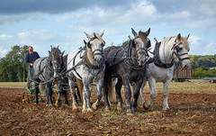DSC05735 (Andy Oldster) Tags: eashing godalming farm plough ploughing heavyhorses shire sony alpha a65 slt