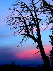 Blues and Pink (moonjazz) Tags: blue sky tree trunk branches bare silhouette pink hues color photography nature black mountainrange vista california alpine twilight time stark