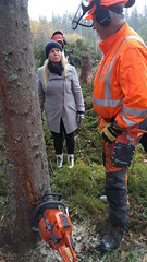 Branschdag Frna (Unmarriedswede) Tags: chainsaw instructions angle fall down tree forest girl woman lady woods