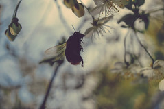 Kakotkin_com_080515_0057_DxO_1 (rkakotkin) Tags: tree texture apple zeiss spring blossom russia sony structure retro ring trunk wallpapers tver cracked vsco sonya7