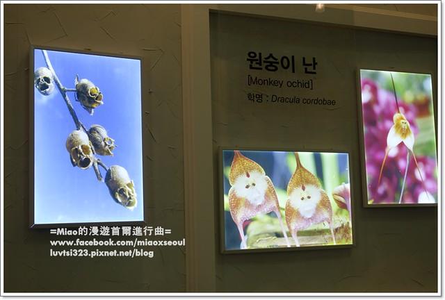 고양국제꽃박람회048