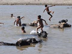 children buffalo in the Tawi River (numb3r5) Tags: india swim children fun bufallo tawiriver