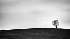 Alone......... (klythawk) Tags: white black nature monochrome clouds grey mono spring moody sony minimalistic lanscape nottinghamshire greysky lonelytree 70200mm plainsimple maplebeck ploughedfields klythawk a7ll