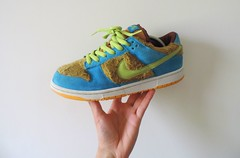 Baby Bear (Sneaker Freak) Tags: bear baby low nike pack sb dunk