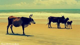 A family goes to the beach. Uma família vai à praia