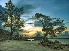 Trees on the beach, sunset (Rama Nusjirwan) Tags: bej iphone6ssnapseed