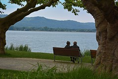 Seeblick / lake view (Niwi1) Tags: lake tree nature water germany see nikon wasser view outdoor natur bodensee baum constance niwi1
