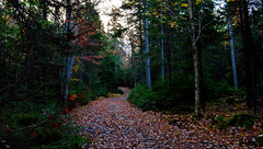 Rain Of Leaves (TheNovaScotian1991) Tags: morning autumn trees canada fall victoriapark colorful novascotia fallcolors kitlens trail 1855mm truro pathway fallenleaves nikond3200 colchestercounty
