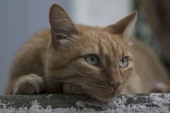 Le regard... (Elyane11) Tags: regard yeux saariysqualitypicturesgallery
