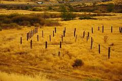Golden corral (Narodnie Mstiteli) Tags: mogul ranch corral old golden goldencorral nevada cheatgrass