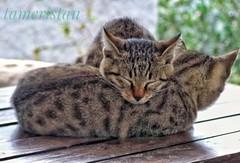 Two siblings. (tameristan) Tags: sibling siblings kediler kedi kardes girls bodrum turgutreis sleep sleeping