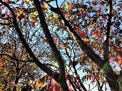 Herbst macht Fortschritte-bw_20161007_070076.jpg (Barbara Walzer) Tags: 071016 blätter bunt bäume farbe herbst natur wald blã¤tter bã¤ume