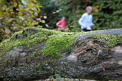 Hallwilerseelauf: Natur pur beim 10 Kilometer-Lauf