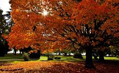 Feu sans fume (Diegojack) Tags: automne couleurs paysages vaud arbres parc indpendance morges lumire