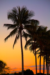 Palm sunset (Deb Jones1) Tags: sunset sky beauty silhouette sunrise skyscape australia palm palmtrees tropical palmsunset bargara