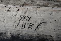 Yay Life! (jeff's pixels) Tags: life wood beach log drift