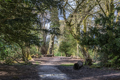 DSC_0020  - Thanet Lee Wood (SWJuk) Tags: park wood uk trees light england sunlight home spring nikon unitedkingdom britain lancashire trail gb footpath lightroom burnley 2016 18300mm towneleypark d7100 rawnef swjuk nikond7100 thanetlee apr2016