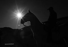 Siluetas en blanco y negro (estersinhache) Tags: bw blancoynegro sol caballos 28mm cielo canon5d sombras siluetas